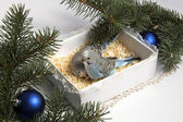 Christmas gift, two small bird — Stock Photo