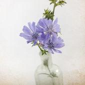 Flowers in a bottle — Stock Photo