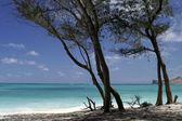 Zomer aard weergave met palmbomen op het strand in de buurt van de zee onder de blauwe hemel. — Stockfoto