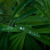 Waterdrops on green leafes — Stock Photo