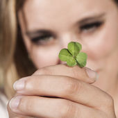 Four-leafed clover — Stock Photo