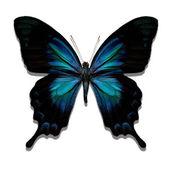 Blå, glänsande fjäril — Stockfoto