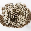 Stockfoto: Wasps nest