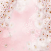 Pink background with white flowers — Stock Photo