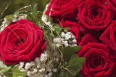 Red natural roses background — Stock fotografie