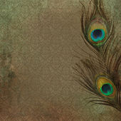 Vintage grunge background with peacock feather — Stock Photo