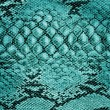 Stock Photo: Snake skin leather