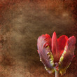 Vintage shabby chic background with tulip — Stock Photo