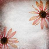 Vintage shabby chic background with echinacea — Stock Photo