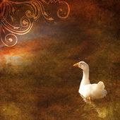 Vintage shabby chic background with goose — Stock Photo