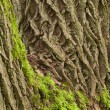 Tree bark with moss - Stock Photo