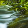 Brook in the forest — Stock Photo #25850623