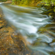 Brook in the forest — Stock Photo #25850625