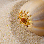 Shells in the sand background — Stock Photo