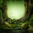 Dreamily forest — Stock Photo #27389843