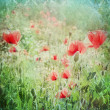 Vintage shabby chic background with red poppy  — Stock Photo