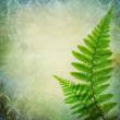 Vintage background with fern leaves — Stock Photo #27752675