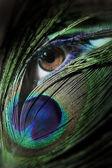 Krásná žena oko s paví pero — Stock fotografie