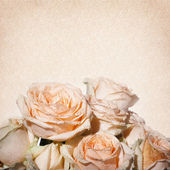 Vintage shabby chic background with roses — Stock Photo