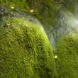 Mossy waterfall — Stock Photo #31027925