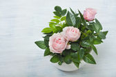 Beautiful little roses — Stock Photo