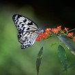 Beautiful butterfly on red flowers — Stock Photo #38674543