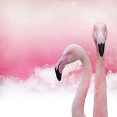 Pink flamingo background — Stock Photo