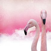 Pink flamingo background — Stock Photo