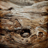 Wood structure grunge background — Photo