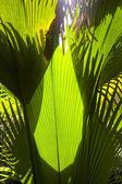 In the jungle — Foto de Stock