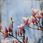 Dreamy magnolia background — Stock Photo