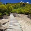 Trailway through the mangrove forest — Stock Photo