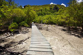 Trailway through the mangrove forest — Foto de Stock