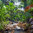 Jungle Landscape with Waterfall — Stock Photo
