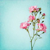 Shabby Chic Background with rose — Stock Photo