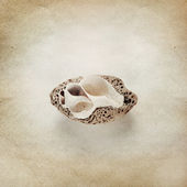 Vintage background with snail fossil — Stock Photo