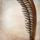 Vintage background with phesant feather — Stockfoto