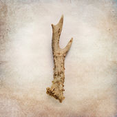 Vintage background with deer antler — Stock Photo