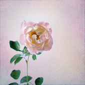 Vintage background with rose and cup — Stock Photo