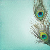 Vintage background with peacock feathers — Stock Photo