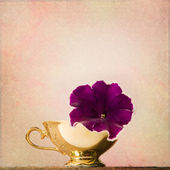 Shabby Chic Background with petunia in an antique cup — Stock Photo