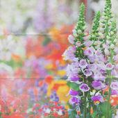 Garden perennials background — Stock Photo