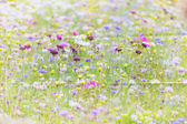 Wildflower meadow background — Stock Photo