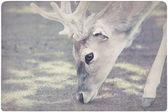 Deer background — Stock Photo