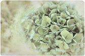 Hydrangea Flower Backround on old, yellowed Paper — Stock Photo