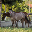 Two horses on a farm — Stock Photo