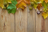 Autumn leaves and dry fruits — Stock Photo