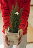 Live Christmas tree — Stockfoto