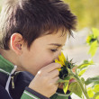 Stock Photo: Child with sunflower