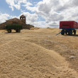 Stock Photo: Lots of wheat grains with two carriages and hermit in background